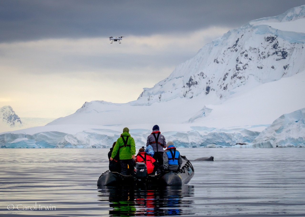 Explore The Beauty Of Caribbean: Best Of Antarctic Cruises In 2016 - 17
