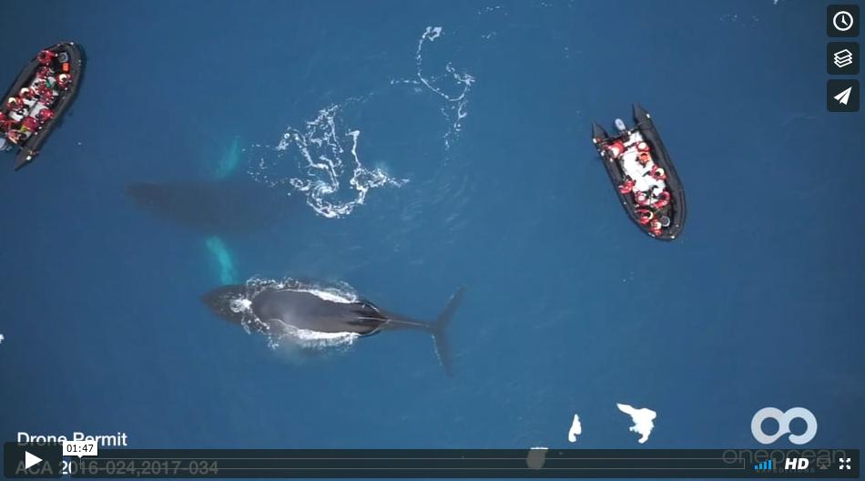 Antarctica whales