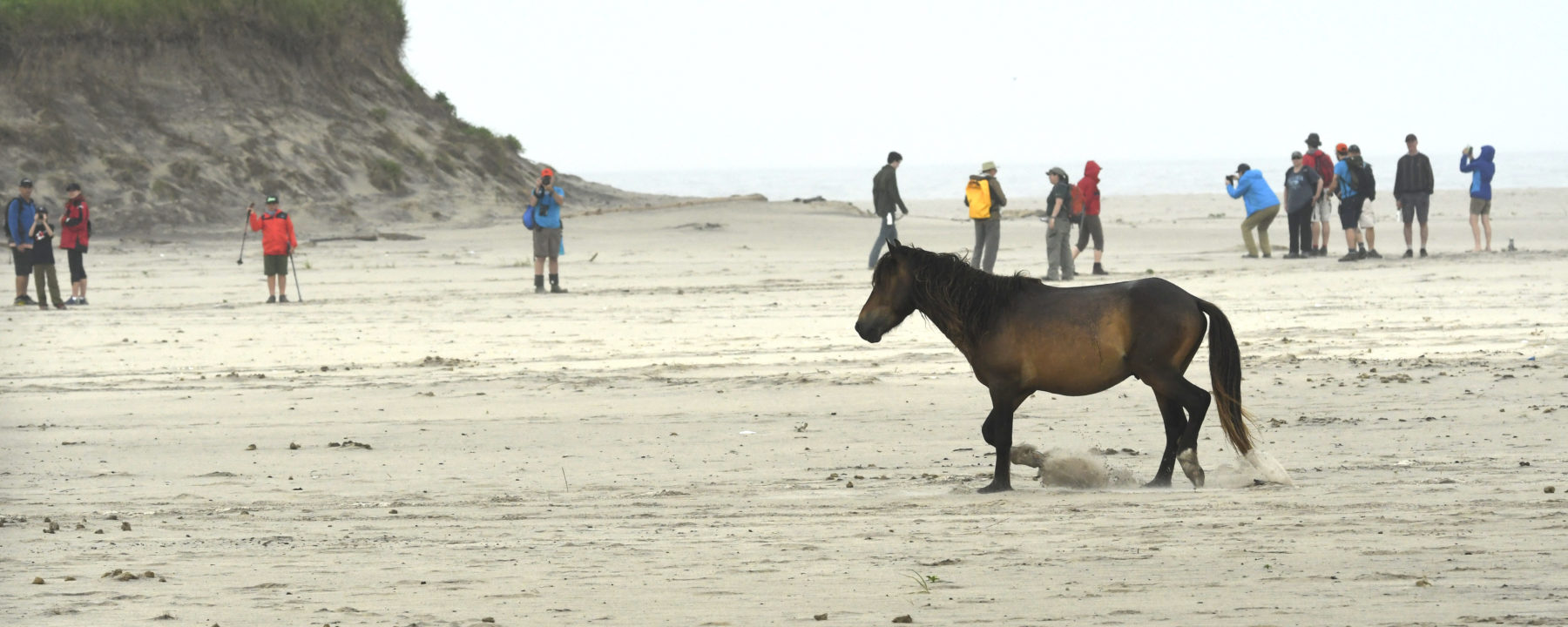 Sable Island and its wild horses provide excellent conditions for taking images.