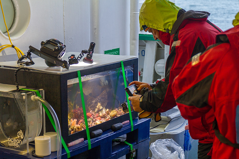 A passenger photographs collected specimens in a display tank on MV Akademik Ioffe. Photo: Jeremy Heywood