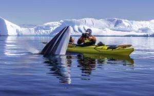 Antarctic cruising