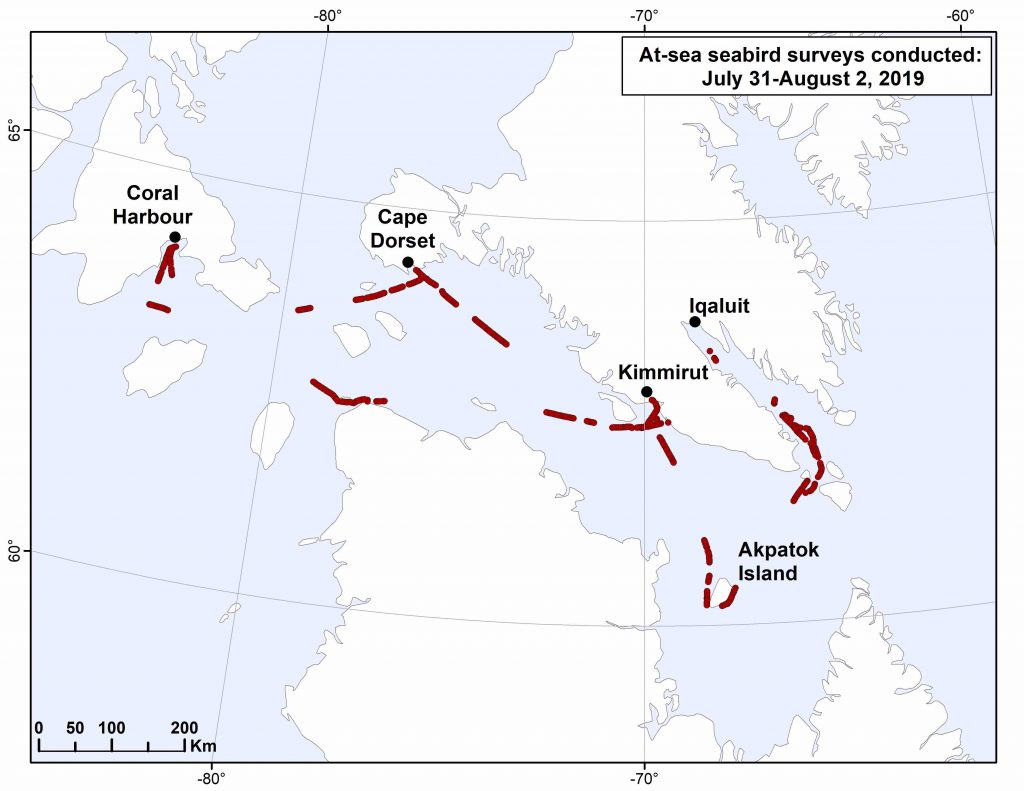 Arctic birds survey map