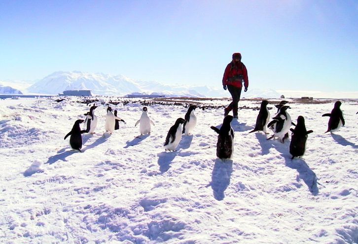 Jill walking with penguins at Cape Hallett, Antarctica