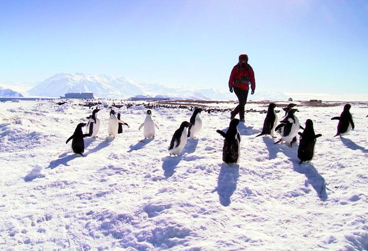 Jill walking with penguins at Cape Hallett, Antarctica