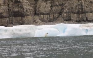 a polar bear sighting
