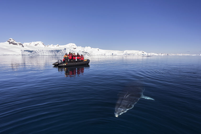 Zodiak passengers watch as a curious Minke Whale.