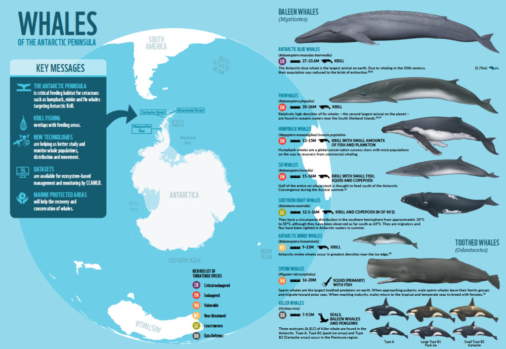 Infogram produced for the WWF UCSC Antarctic Whales Report 2018