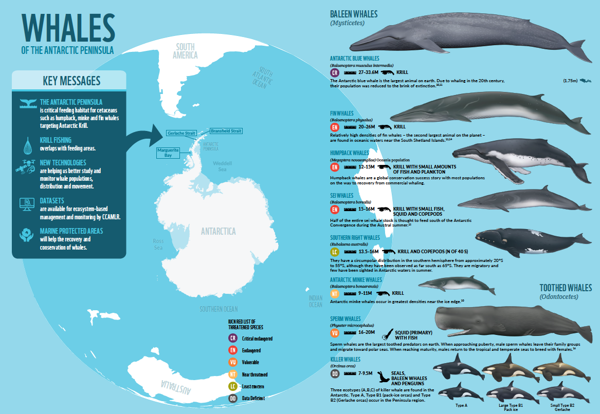 Researching Whales in Antarctica | One Ocean Expeditions